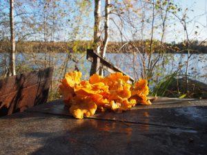 Sienestystä Rantalan Lomamökeillä