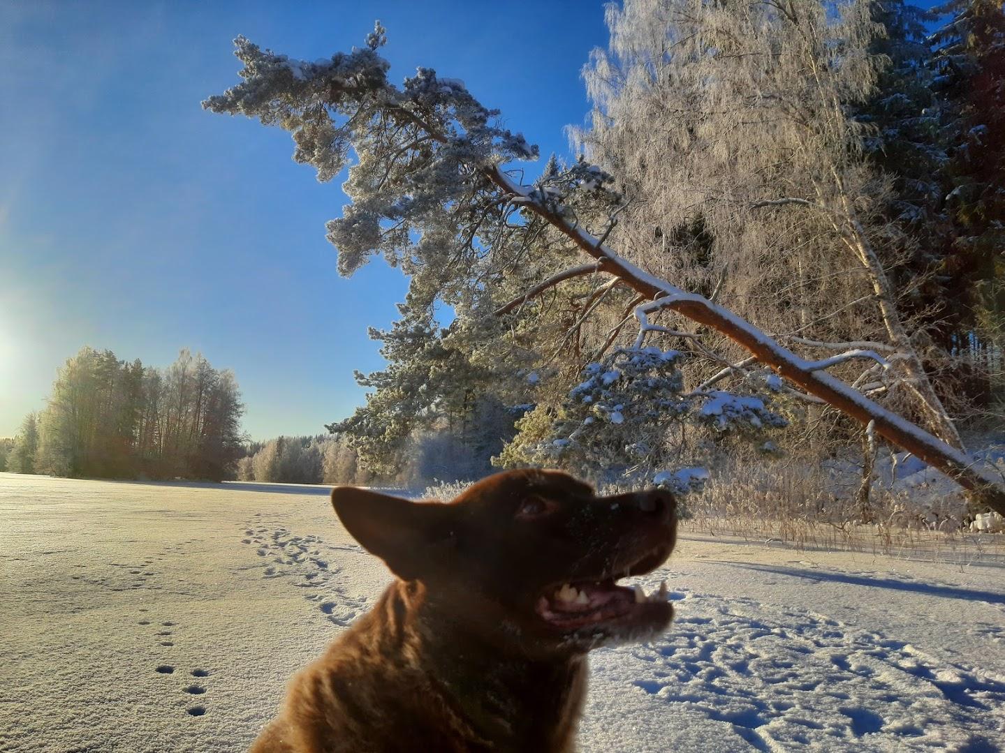 Velmu talvi